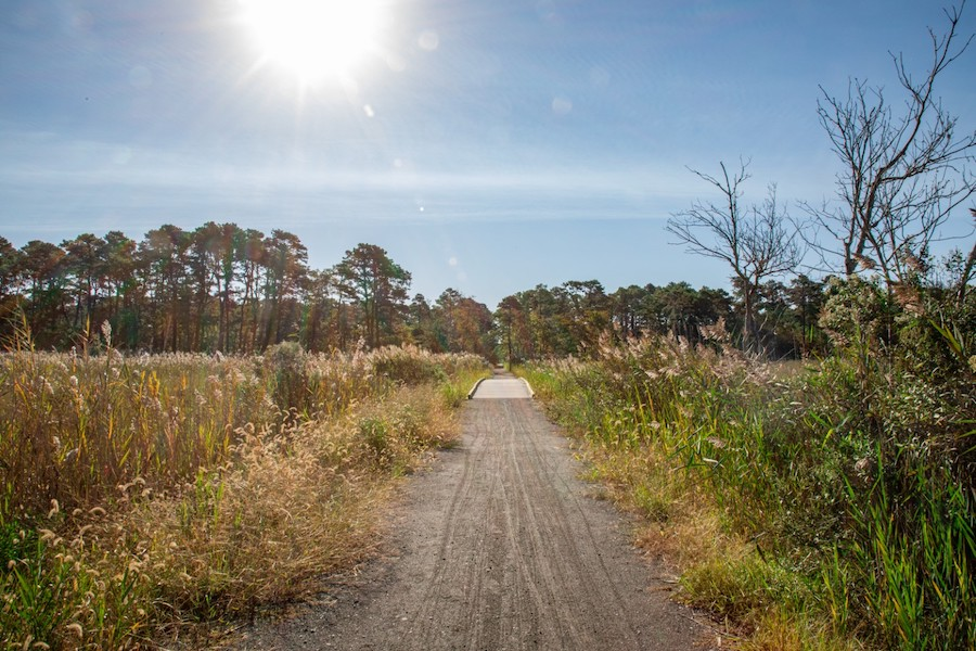 Walking Dunes Trail | Courtesy Delaware State Parks
