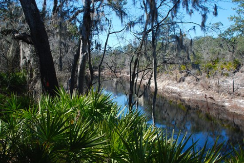 suwannee-river-florida.png