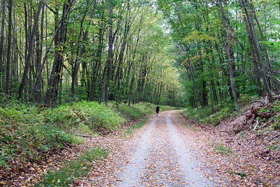 New jerseys columbia trail trailblog woodlands along the trail photo morris county park commission publicscrutiny Image collections