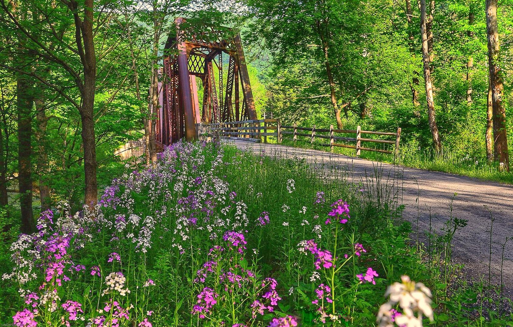 Pennsylvania S Pine Creek Rail Trail Trailblog