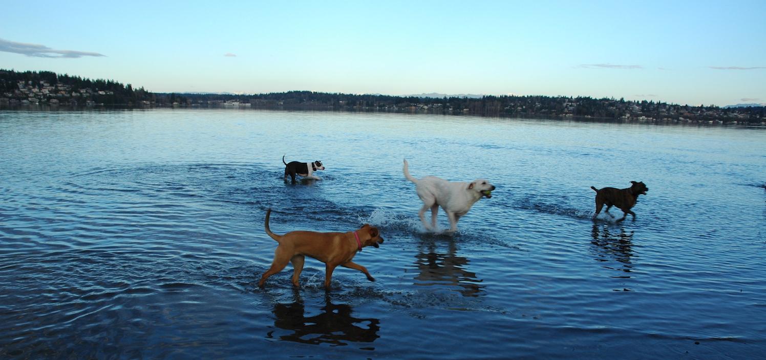 Dog Parks In Burke