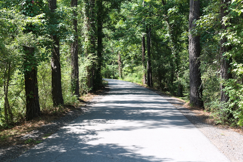 Much of the Tammany Trace is wooded | Photo courtesy St. Tammany Parish