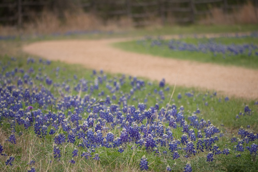 Lyndon B. Johnson Ntl Historical Park_Texas_Bluebonnets_PHoto by Frank Fujimoto_CC by 2.0