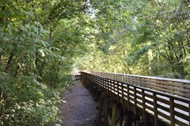 Serene bridge along Tanglefoot Trail | Photo courtesy GM&O Rails-to-Trails Recreational District of North Mississippi