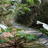 The Longleaf Trace Is a Beautiful Beacon for Health, Revitalization in Mississippi