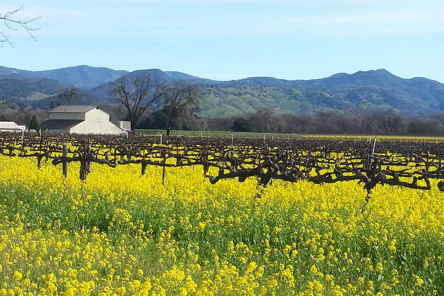 Napa Valley Vine Trail | Photo by TrailLink user tommyonbike