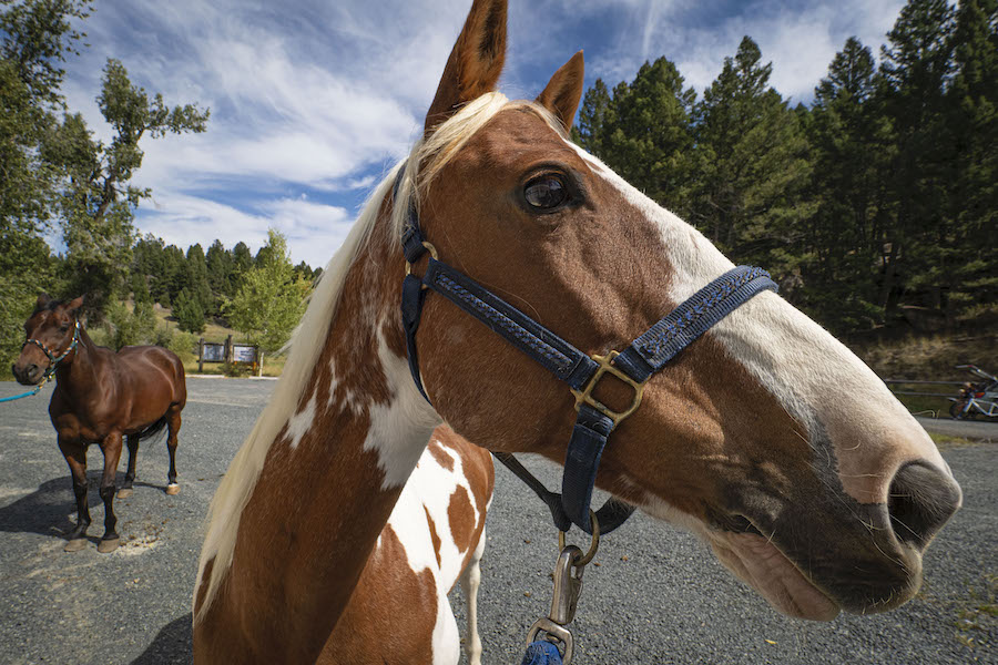 Former Recreation Forester Jocelyn Dodge prepares her horse for a ride | Photo by Preston Keres, courtesy USDA Forest Service